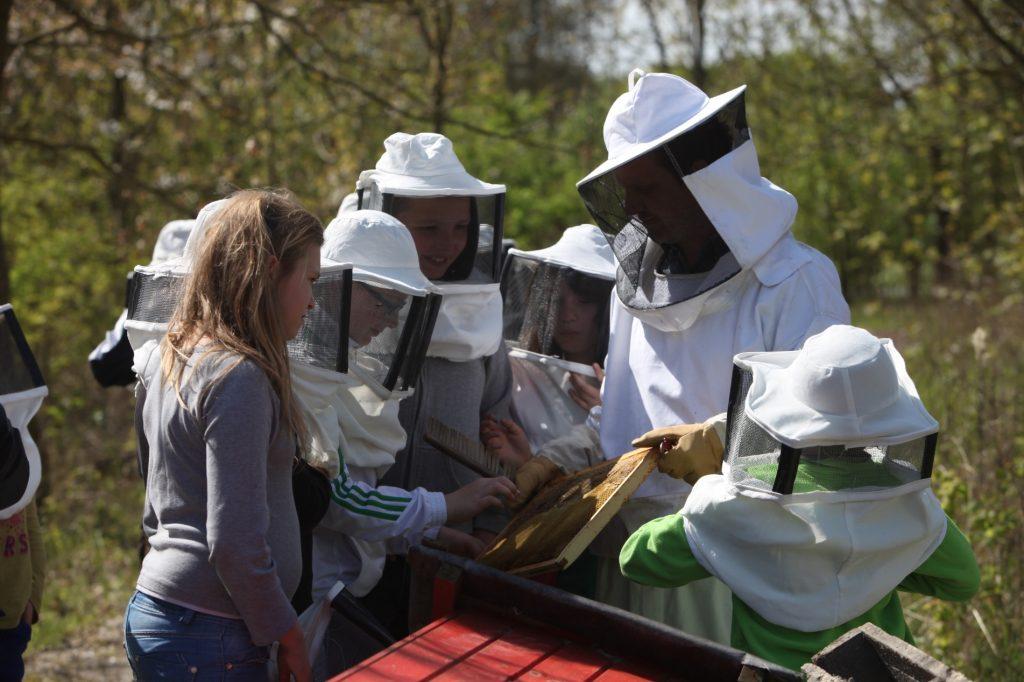 """Découvrir l'importance des abeilles, """"chenilles"""" ouvrières de la biodiversité"""