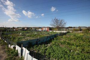 Les jardins ouvriers sont des terres de partage à destination des habitants