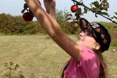 V-vergers-cueillettefruits-3